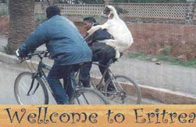 Bicycle Riding Goat